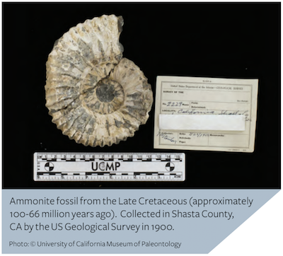 Insight_Fall2018_museums_ammonite_400x362.png
